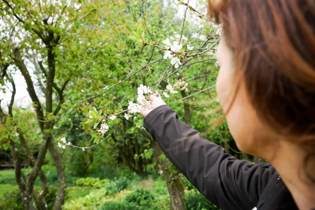 Træ Joy